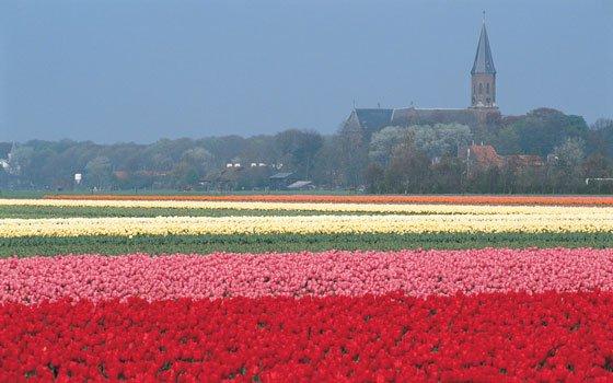 http://www.holland.com/us/tourism/regions/flower-fields.htm